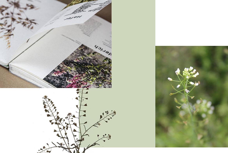Herbarium_Innen
